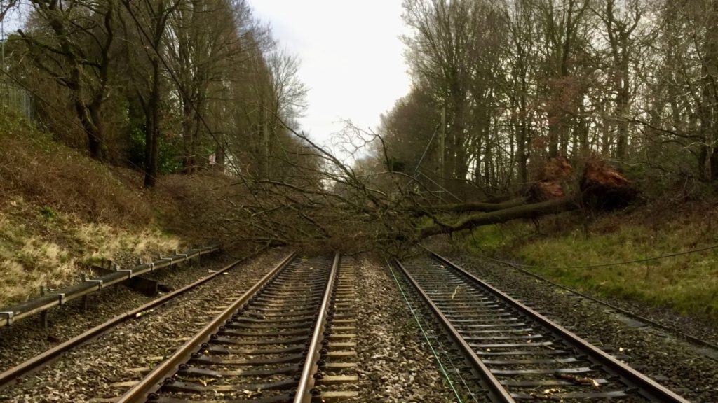 A fallen tree blocking all lines on a rail track.